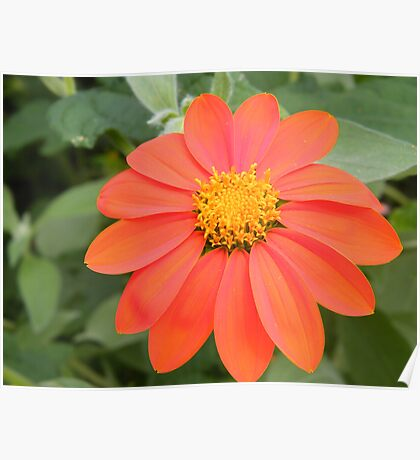 Flower Close-Up, New York Botanical Garden, Bronx, New York   Poster