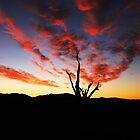 Spring Sunset  by Kym Bradley