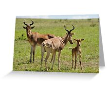 """""""Hartebeest family"""" Greeting Card"""