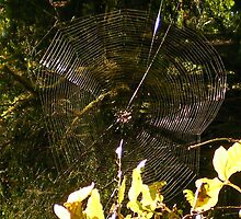 Spiderweb in the middle of the redwoods by AnnaRingo