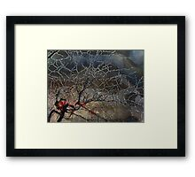 Only the Brave and Foolish Framed Print