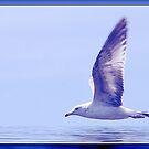 Seagull In Flight by Darlene Bayne