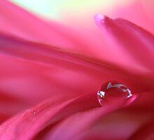 Dewdrop in Pink by Kathie Nichols