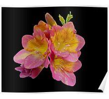 An Iris Flower Poster