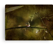 Spring Dew Canvas Print