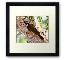 """""""Blue Faced Honey Eater"""" Framed Print"""