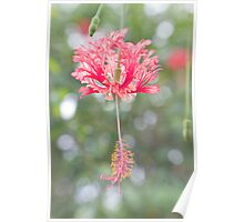 Hanging Flower Poster