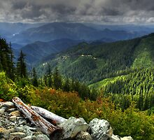 Late Days Delight by Charles & Patricia   Harkins ~ Picture Oregon