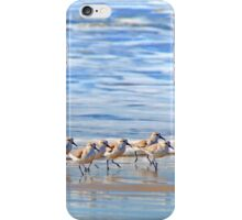 We're following the leader... Sandpipers in Goleta Beach California iPhone Case/Skin