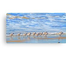 We're following the leader... Sandpipers in Goleta Beach California Canvas Print