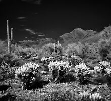 McDowell Sonoran Preserve, Scotsdale Arizona by Rodney Johnson