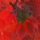 Red Leaves by CarolM