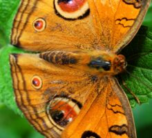 Brown Butterfly Sticker
