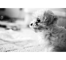 Sparky Photographic Print