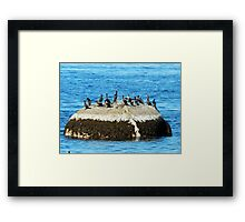 Cormorants on the Big Rock Framed Print
