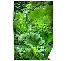 Umbrella Plants Poster