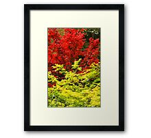 Red And Yellow Leaves Framed Print