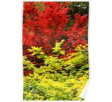 Red And Yellow Leaves Poster
