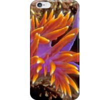 Spanish Shawl. (Flabellina iodinea) Santa Cruz Island, CA iPhone Case/Skin
