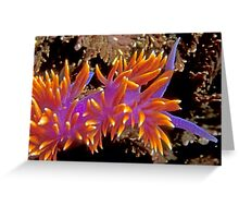 Spanish Shawl. (Flabellina iodinea) Santa Cruz Island, CA Greeting Card