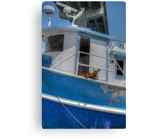 Sea dogs in The Bahamas Canvas Print