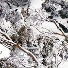 snow gums II by geophotographic