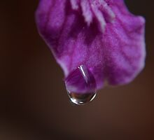morning dew by michelle meenawong