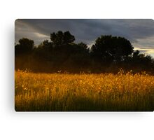 Yellow Streak Canvas Print