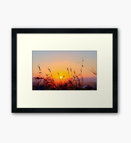 Sunset Spring Grasses - Byron Bay Framed Print