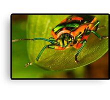 Metallic Shield Bug (Scutiphora pedicellata) Canvas Print
