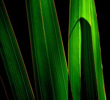 black and green by michelle meenawong