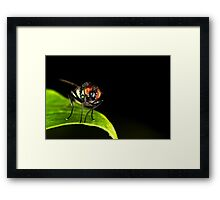 Fly On A Leaf Framed Print