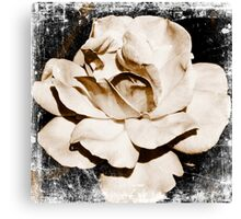 Rose - antique Canvas Print