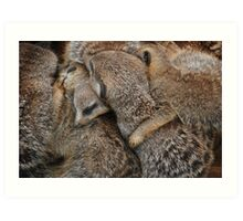 Meerkats Sleeping Art Print