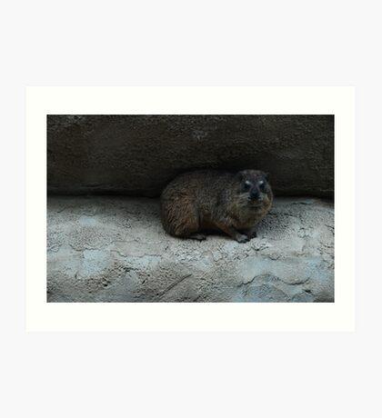 Chester Zoo Art Print