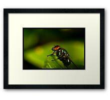fly On A Leaf #2 Framed Print