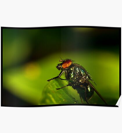 fly On A Leaf #2 Poster