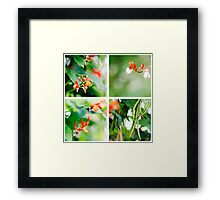 Runner Beans Framed Print