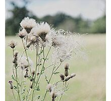 Thistle Photographic Print