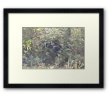 Watched From the Woods Framed Print