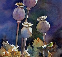 Poppy Seed Heads by Ann Mortimer
