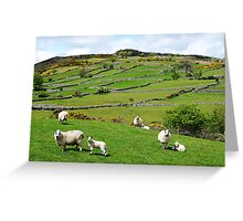 Kerry Hill Sheep Greeting Card