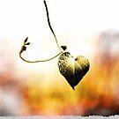 A Heart for Autumn by Rachel Sonnenschein