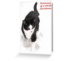 White Christmas - Polly the rescue cat Greeting Card