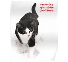 White Christmas - Polly the rescue cat Poster