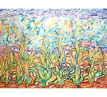 The Corn Fields Photographic Print