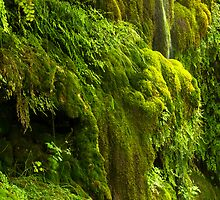 Waterfall in Green by Bryan  Keil