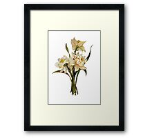 Double Narcissi In A Bouquet Isolated Framed Print