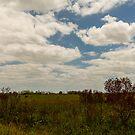 Big Cypress Preserve 6 by Carson Wilcox