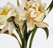 Double Narcissi In A Bouquet Sticker